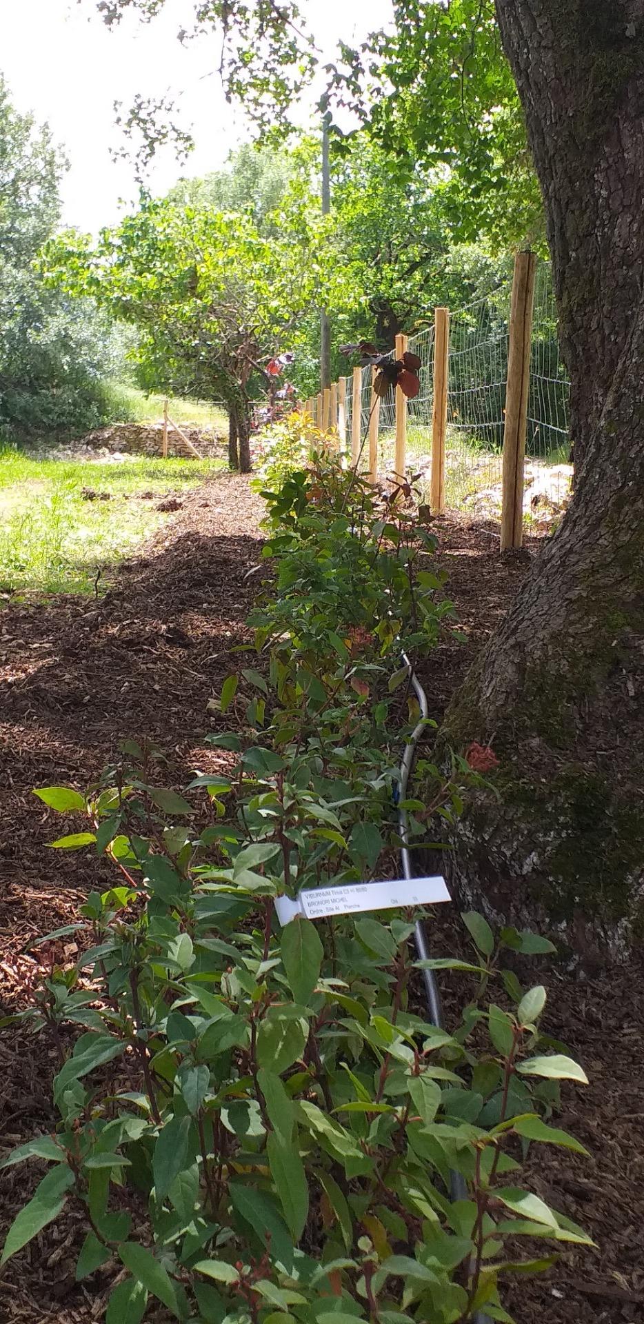 Plantation d'espaces verts